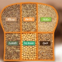 Ezekiel Sprouted Bread