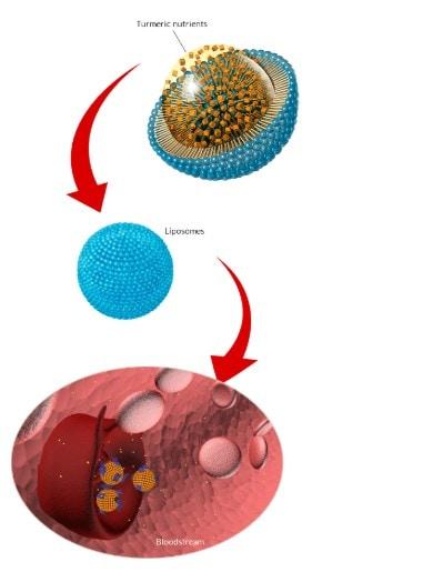 How PuraTHRIVE Liposomal Turmeric works