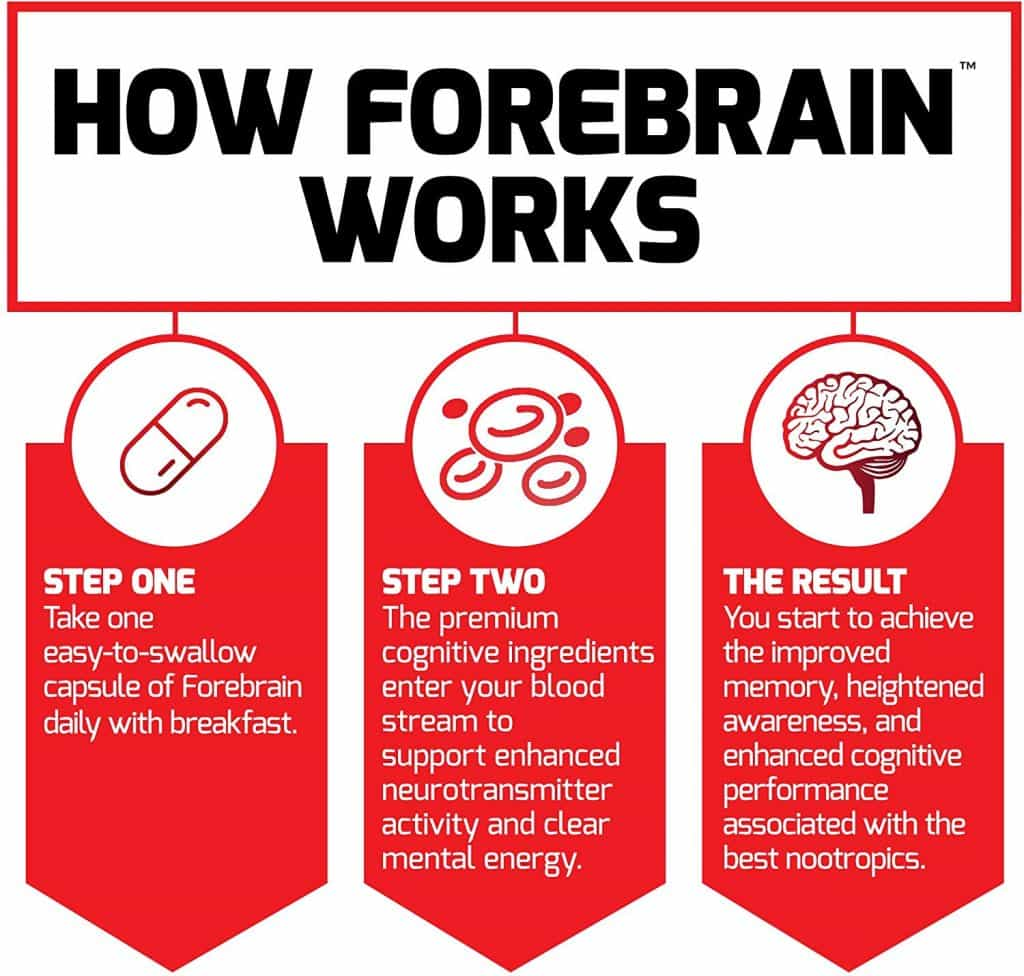 How does Forebrain work?