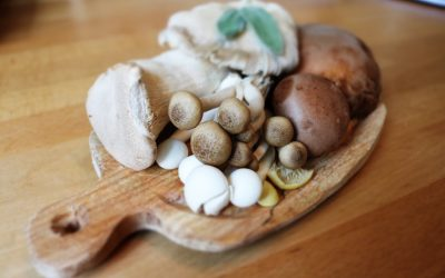 Best Mushroom Supplements – Our Top 3 Choices