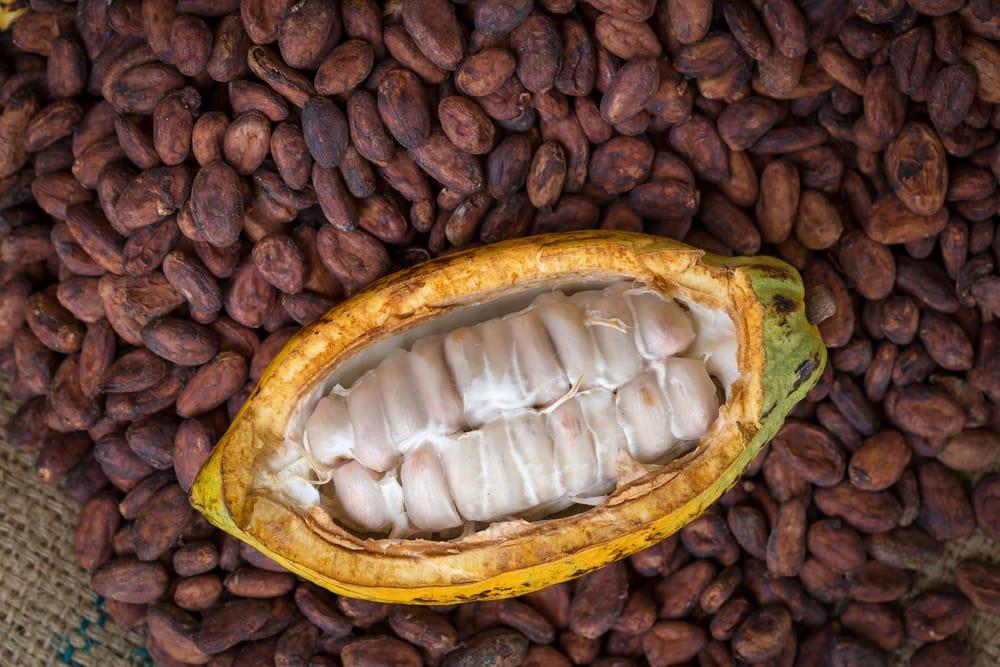 Eternus Cocoa Seed Extract