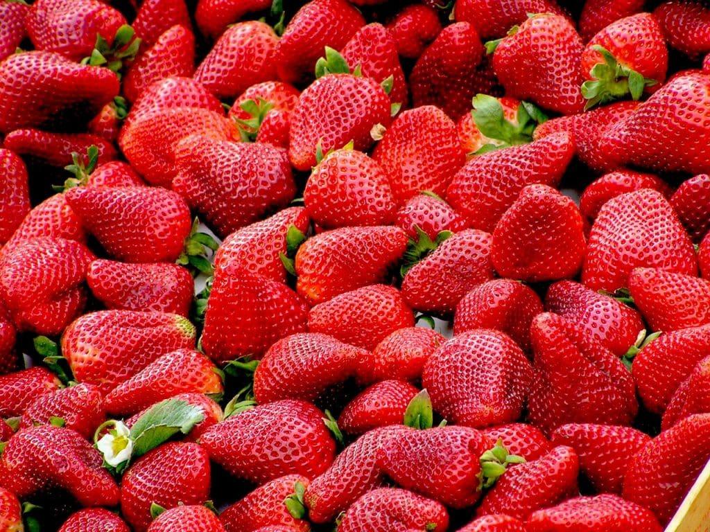 Eternus Strawberry Seed Extract