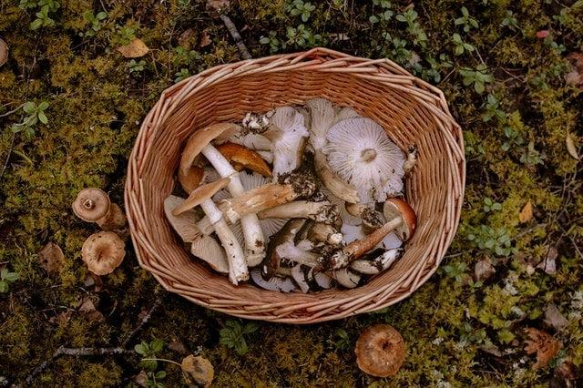 Genius Mushrooms ingredients in a basket