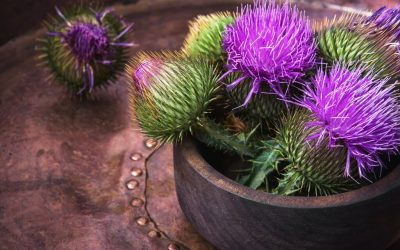 Benefits Of Milk Thistle – How Does This Supplement Support Your Health?
