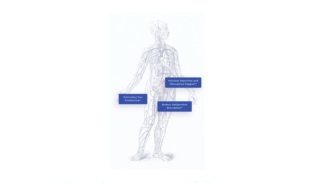 EnzymeMD Benefits