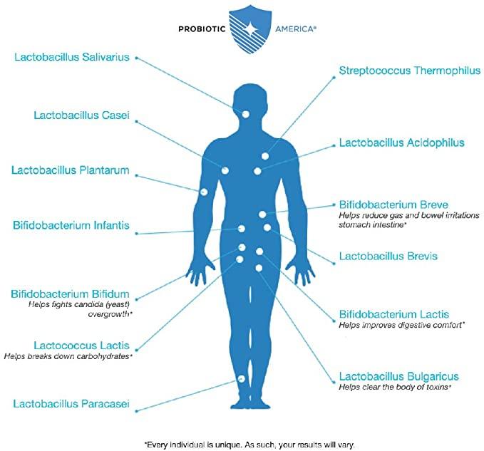 Perfect Biotics Benefits